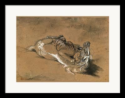 Tiger Attacks A Horse Drawings Framed Prints