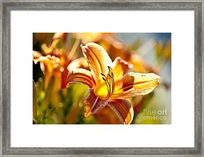 Tiger Lily Flower Framed Print by Elena Elisseeva