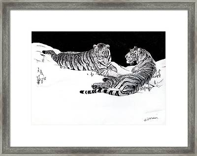 Tigers In The Snow Framed Print by Hari Mohan