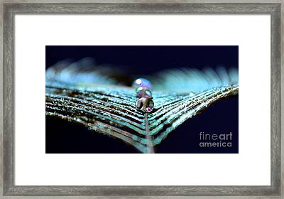 Time Flies Framed Print by Krissy Katsimbras