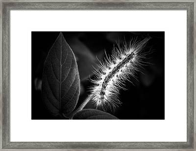 Tiny Dancer Framed Print by Karen M Scovill