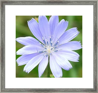 Tiny Dancers Framed Print by Ed Smith