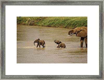 Tiny Elephants Framed Print