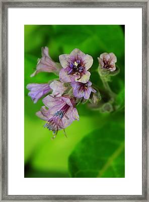 Tiny Purple Flower Framed Print by Patrick  Short
