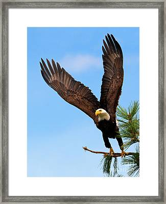 To The Air Framed Print