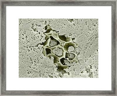 Tofu Sem Framed Print