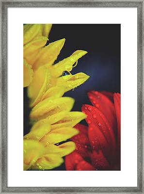 Together We Can Do Anything Framed Print
