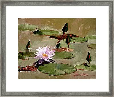 Tomorrow's Blooms- Water Lilies Framed Print