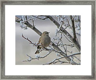 Townsend's Solitaire Framed Print