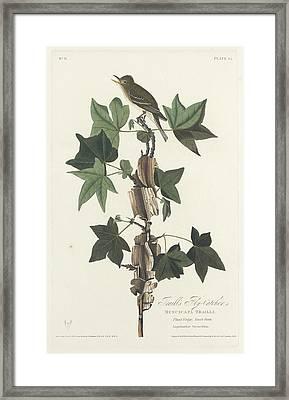 Traill's Flycatcher Framed Print by John James Audubon