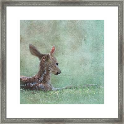 Framed Print featuring the photograph Tranquil by Sally Banfill
