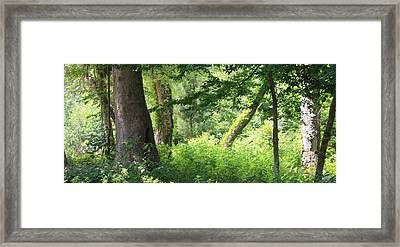 Framed Print featuring the photograph Tranquility by Roena King