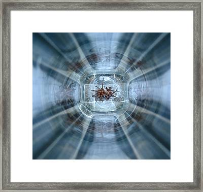 Trapped Framed Print by Tracey Levine