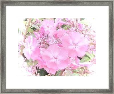 Tread Softly Framed Print by Nancy Pauling