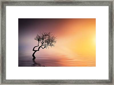 Tree At Lake Framed Print by Bess Hamiti