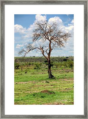 Framed Print featuring the photograph Tree by Charuhas Images