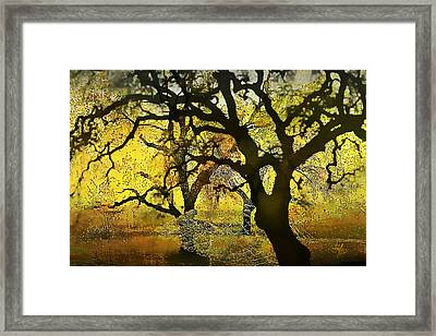 Tree Deconstructed 5 Framed Print by Lynda Payton