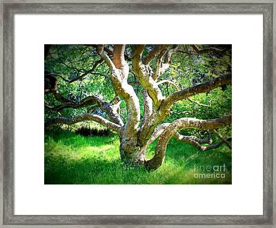 Tree In Golden Gate Park Framed Print