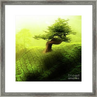 Tree Of Life Framed Print by Mo T