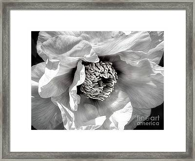 Framed Print featuring the photograph Tree Peony 'mystery' by Ann Jacobson