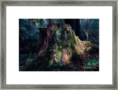 Tree Stump Framed Print by Terry Elniski