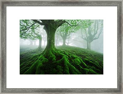 Land Of Roots Framed Print by Mikel Martinez de Osaba