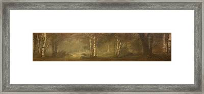 Trees In The Forest Framed Print