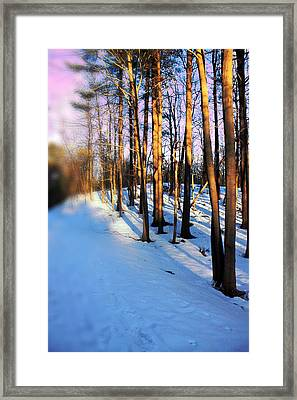 Trees Photography Framed Print by Mark Ashkenazi