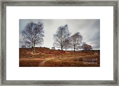 Trees Framed Print by Svetlana Sewell