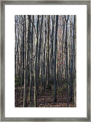 Treez Framed Print