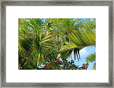 Tropical Plants Framed Print by Zalman Latzkovich