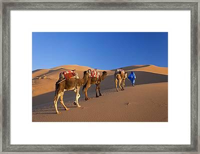 Tuareg Camel Train, Sahara Desert, Morocco Framed Print by Peter Adams