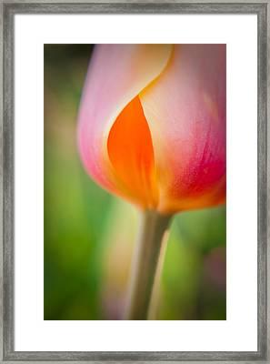 Tulip-2 Framed Print by Joye Ardyn Durham
