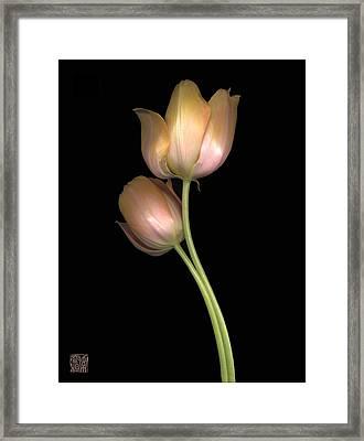 Tulip Framed Print by Lloyd Liebes