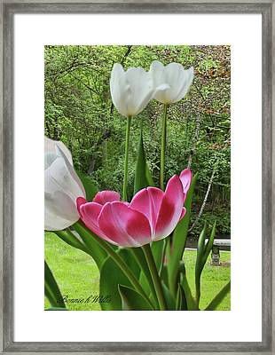 Framed Print featuring the photograph Tulips by Bonnie Willis