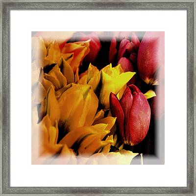 Tulips  Framed Print by David Patterson