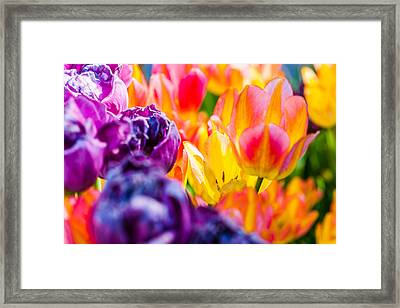 Framed Print featuring the photograph Tulips Enchanting 39 by Alexander Senin