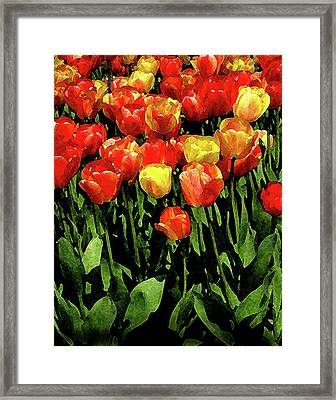 Tulips Framed Print by Timothy Bulone