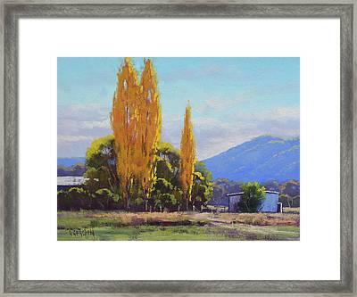 Tumut Autumn Poplars Framed Print
