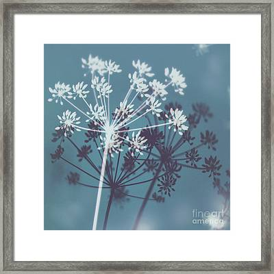 Twilight Stars Framed Print by Tanjica Perovic