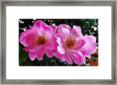 Twin Roses Framed Print by Marsha Heiken