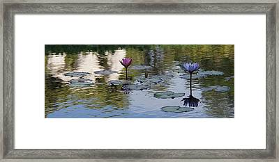 Twins Framed Print by David and Lynn Keller