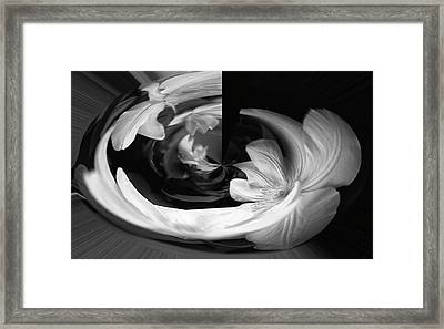 Framed Print featuring the photograph Twisted by Wanda Brandon