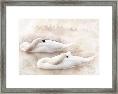 Two Swans Framed Print