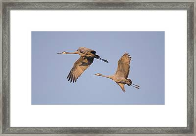 Framed Print featuring the photograph Two Together by Wanda Krack