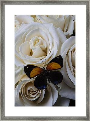 Two Tone Butterfly Framed Print