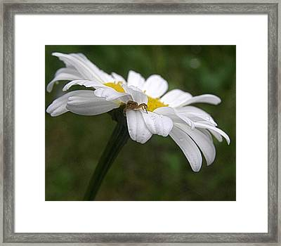 Framed Print featuring the photograph Umbrella For A Spider by Angie Rea