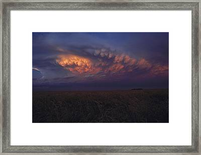United States, Kansas,  Wheat Field Framed Print by Keenpress