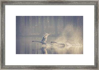 Untitled Framed Print by Brice Le Gall