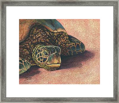 Framed Print featuring the painting Honu At Rest by Darice Machel McGuire